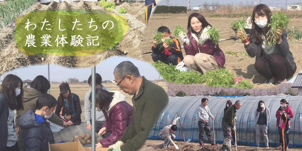 農業体験記