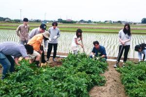 農業体験 ジャガイモ