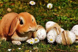 イースター ウサギ 通販