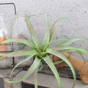 観葉植物 フェイク インテリア
